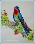 Costa Rica Fiery Throated Hummingbird Fiine Raw BlendFramescopyright2