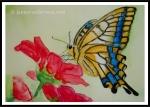 ButterflyOriginalFramecopyrightl