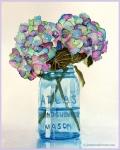 Hydrangea in Blue Vase